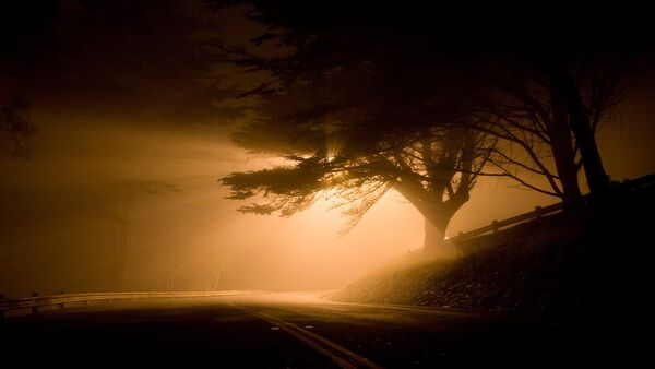 Деревья на обочине дороги, фото из архива - Sputnik Azərbaycan