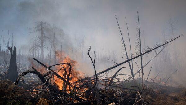 Последствия лесных пожаров, фото из архива - Sputnik Азербайджан