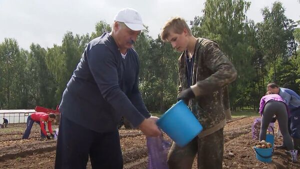 Лукашенко помогает заниматься сбором картофеля в Белоруссии - Sputnik Азербайджан