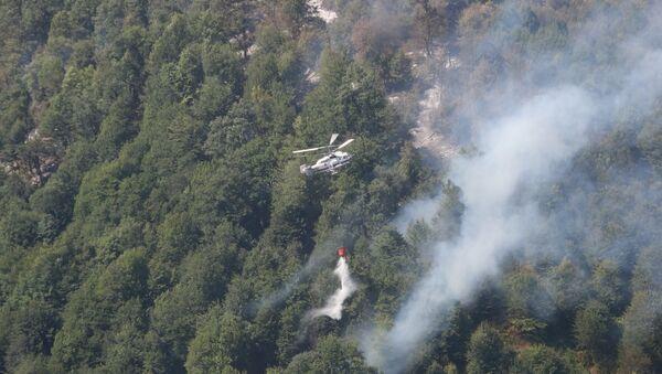 Работы по тушению пожара в лесной зоне Габалинского района - Sputnik Азербайджан