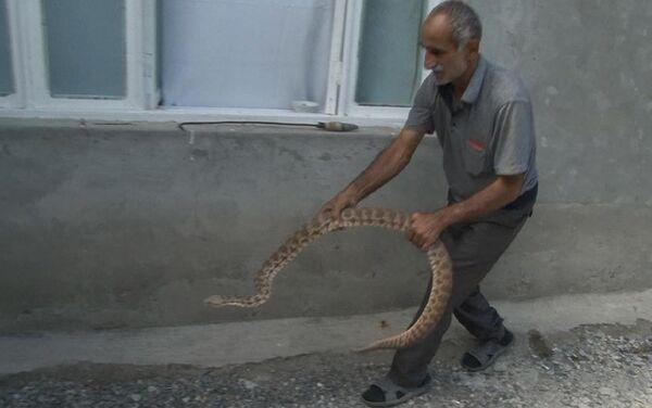 Любитель змей Миргасан Абыев - Sputnik Азербайджан