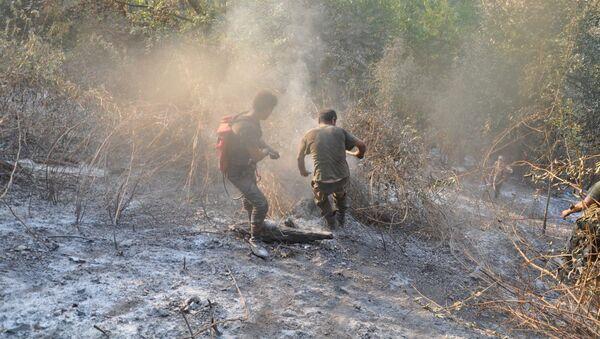 Работы по тушению лесных пожаров, архивное фото - Sputnik Азербайджан