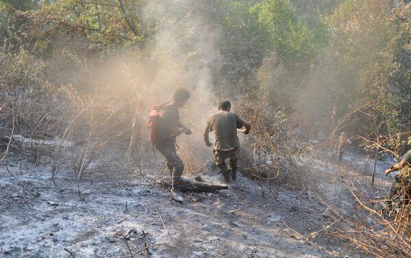 Работы по тушению лесных пожаров на территории Габалинского района - Sputnik Азербайджан