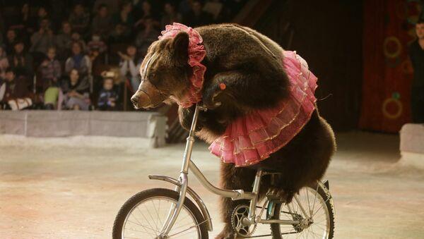 Цирковой номер с с участием медведя, фото из архива - Sputnik Азербайджан