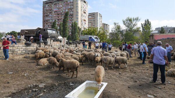 Мелкий рогатый скот в Баку, фото из архива - Sputnik Азербайджан