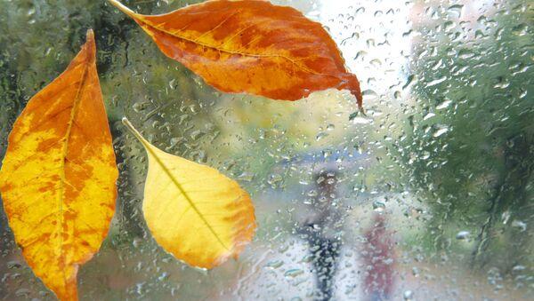 Осенний дождь - Sputnik Azərbaycan