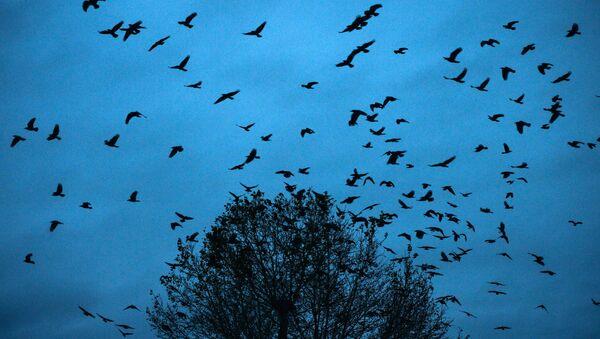 Uçan quşlar, arxiv şəkli - Sputnik Azərbaycan