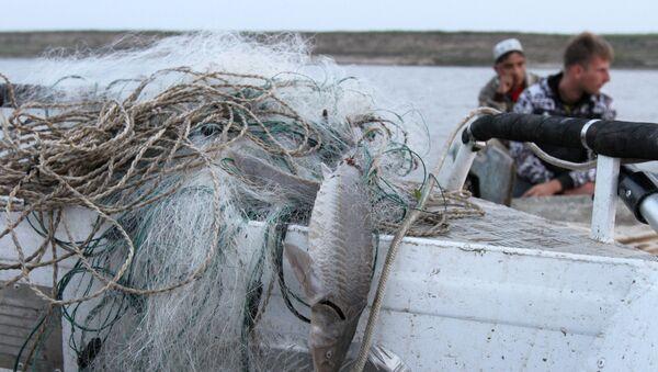 Рыба, пойманная браконьерами сетями, на борту рыбоохранного катера, фото из архива - Sputnik Азербайджан