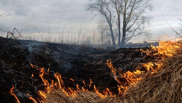 Горение сухой травы на поле, фото из архива - Sputnik Азербайджан