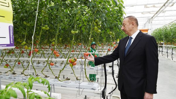 Ильхам Алиев ознакомился с работами, проведенными в BAKU AGROPARK - Sputnik Азербайджан