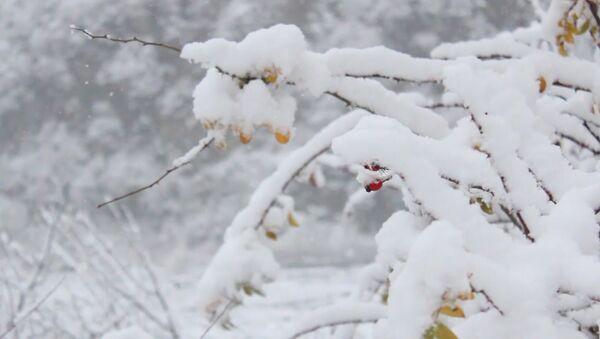 Снег в Гахе, фото из архива - Sputnik Азербайджан