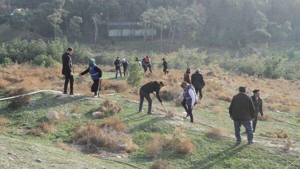 Кампания по посадке деревьев в Агдаме - Sputnik Азербайджан