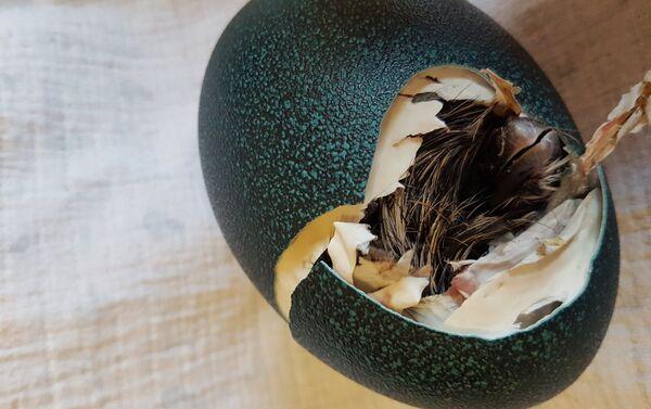 Yumurtadan çıxan cücə - Sputnik Azərbaycan