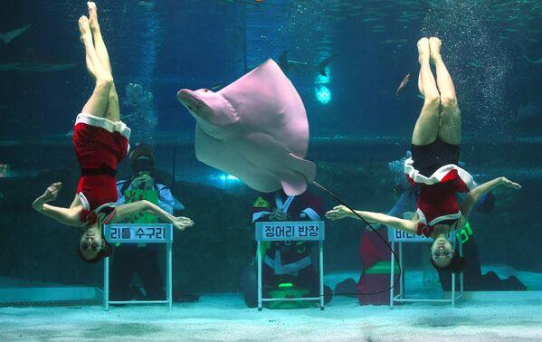 Дайверы в костюмах Санта-Клауса в океанариуме COEX в Сеуле, Южная Корея - Sputnik Азербайджан