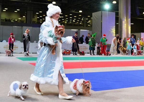 Собаки и их владельцы участвуют в конкурсе костюмов на выставке Золотой ошейник-2016 в Москве - Sputnik Азербайджан
