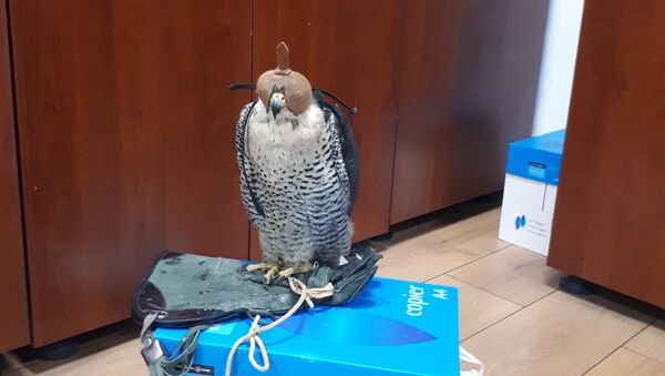 Редкая птица, конфискованная таможенниками в Международном аэропорту Гейдар Алиев в Баку - Sputnik Азербайджан
