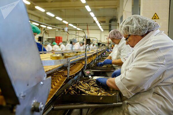 Производство шпрот на латвийском рыбоперерабатывающем предприятии Brīvais vilnis - Sputnik Азербайджан