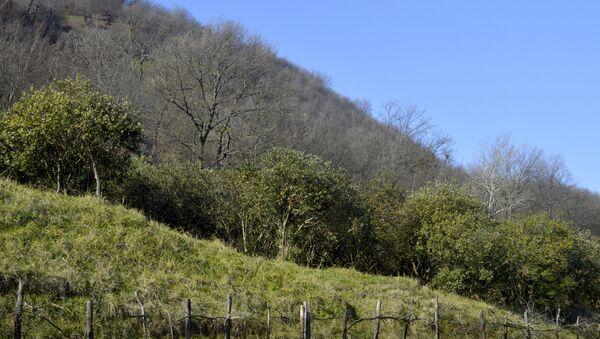 Лес на территории села Хафтони - Sputnik Азербайджан