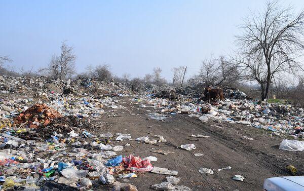 Местные жители видят источник проблемы в нехватке мусорных баков - Sputnik Азербайджан