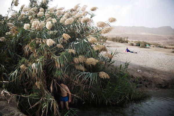 Мужчина стоит среди тростника, на берегу Мертвого моря, Западный берег - Sputnik Азербайджан