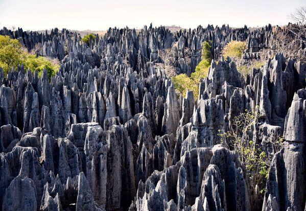 Лес в заповеднике Цинжи-дю-Бемараха, Мадагаскар - Sputnik Азербайджан