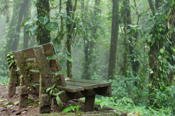 Облачный лес МонтеВерде в Коста-Рике - Sputnik Азербайджан