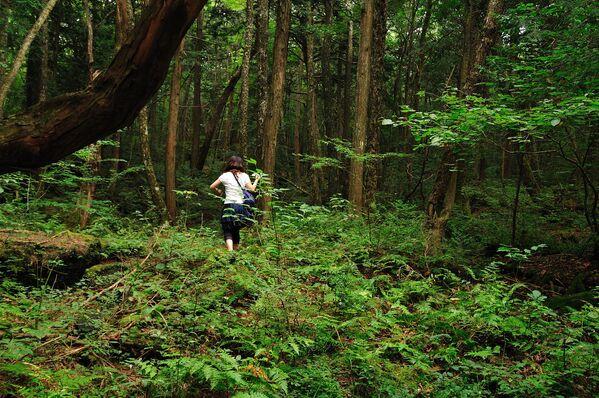 Лес Аокигахара или Дзюкай, расположенный на северо-западном подножии горы Фудзи в Японии - Sputnik Азербайджан