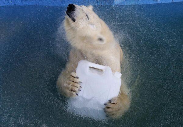 Белая медведица Аврора в бассейне зоопарка Роев ручей в Красноярске - Sputnik Азербайджан