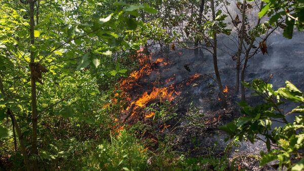 Лесной пожар, фото из архива - Sputnik Азербайджан