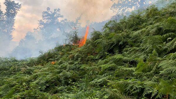 Тушение лесных пожаров на юге Азербайджана, архивное фото - Sputnik Азербайджан