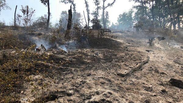 Лесные пожары на территории Ярдымлинского района - Sputnik Азербайджан