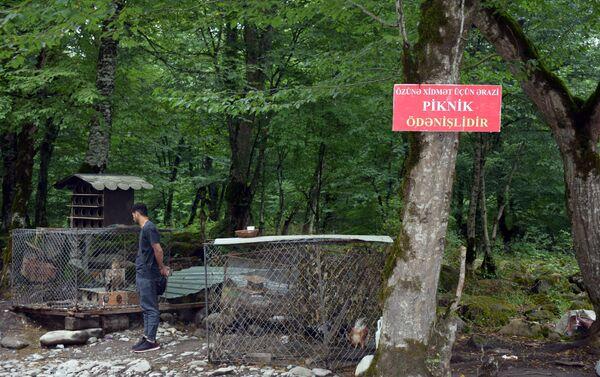 Территория зоны отдыха Хал-хал - Sputnik Азербайджан