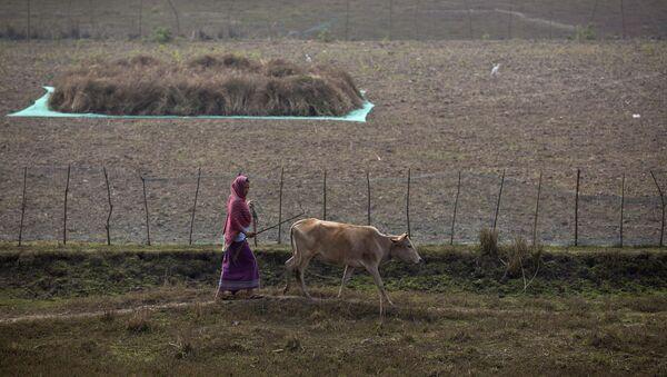 Hindistanlı bir qadın inək otararkən, arxiv şəkli - Sputnik Azərbaycan