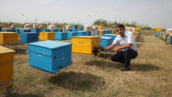 В Джоджуг Марджанлы созданы тепличные и пчеловодческие хозяйства - Sputnik Азербайджан