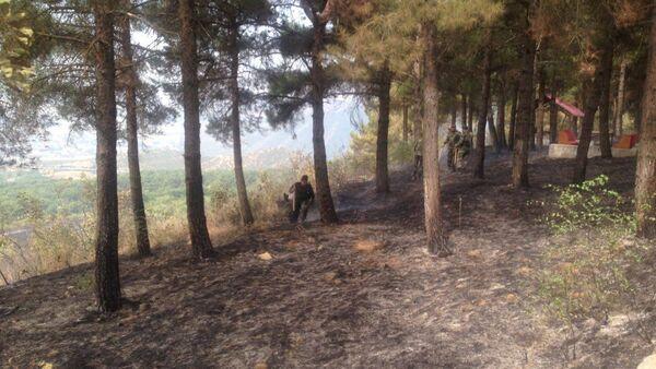 Ağsuda ərazisində meşə yanğını - Sputnik Azərbaycan