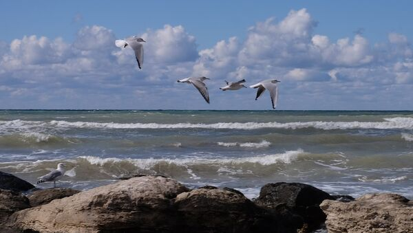 Серебристые чайки на Каспийском море - Sputnik Azərbaycan