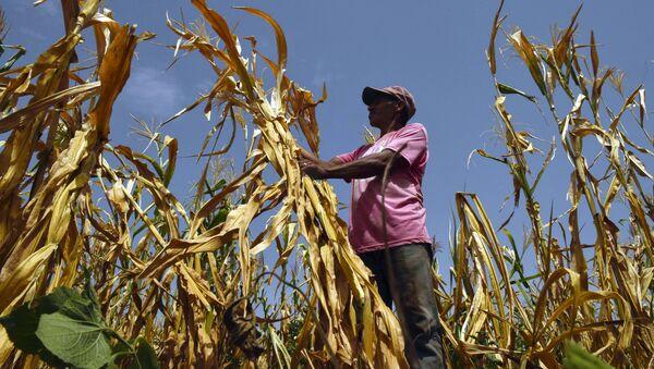 Фермер, потерявший урожай из-за засухи, на поле в городе Усулутан, Сальвадор - Sputnik Азербайджан