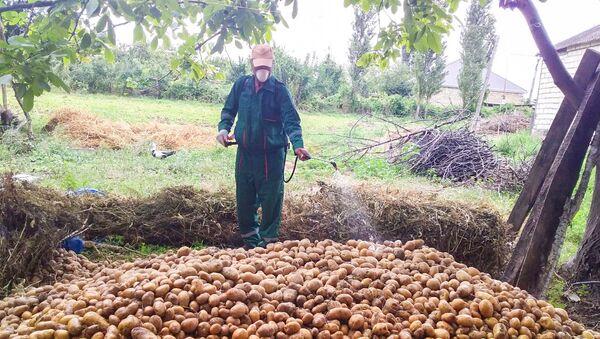 В Азербайджане на картофельных полях обнаружены вредители - Sputnik Азербайджан