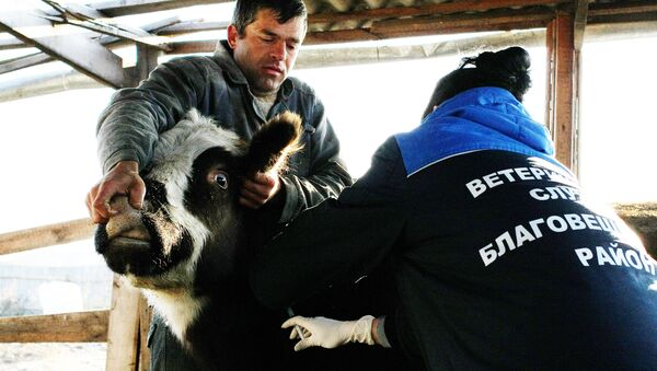 Вакцинация скота, фото из архива - Sputnik Азербайджан