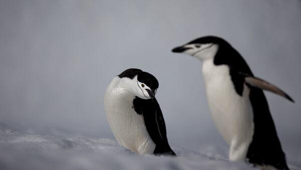 Пингвины в Антарктиде - Sputnik Азербайджан