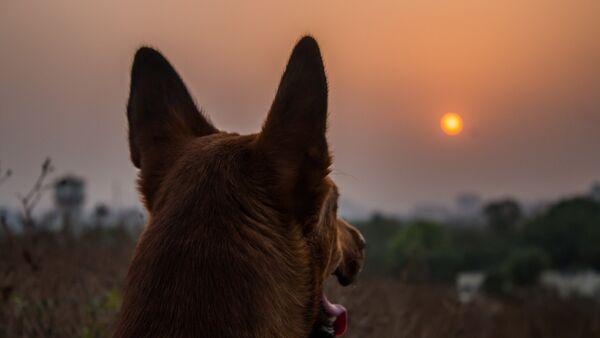 Собака любуется закатом, фото из архива - Sputnik Азербайджан