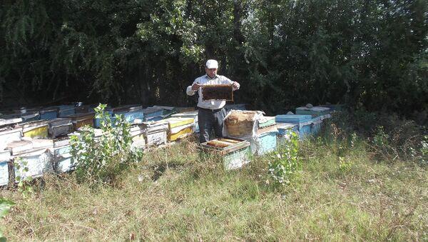 Житель села Аладжадырлы, пчеловод Фахраддин Мамедов - Sputnik Азербайджан