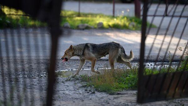 Бродячая собака, фото из архива - Sputnik Азербайджан