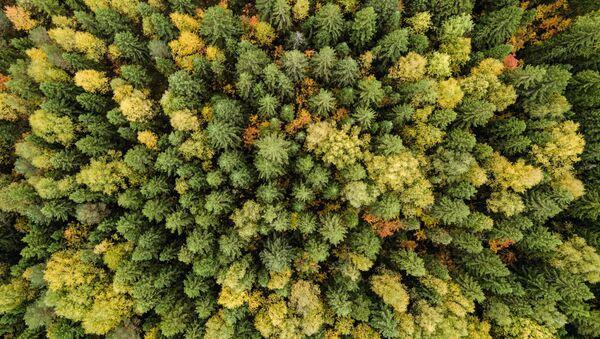 Лес в  Пермском крае, фото из архива - Sputnik Азербайджан
