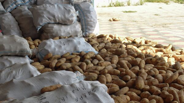 Картофель, фото из архива - Sputnik Азербайджан