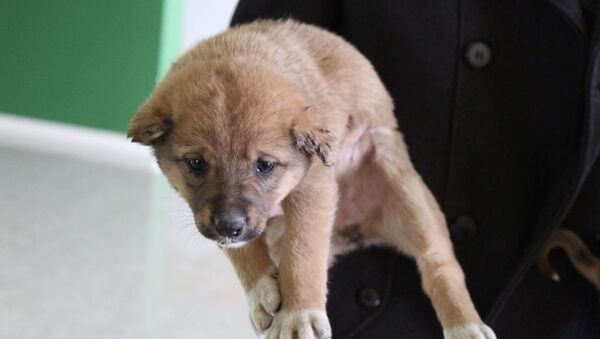 Собака в приюте Топлан - Sputnik Азербайджан