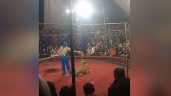 Львица напала на ребенка в цирке на Кубани - Sputnik Азербайджан