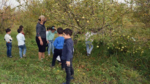 Назим Мамедов раздает свои яблоки нуждающимся - Sputnik Азербайджан