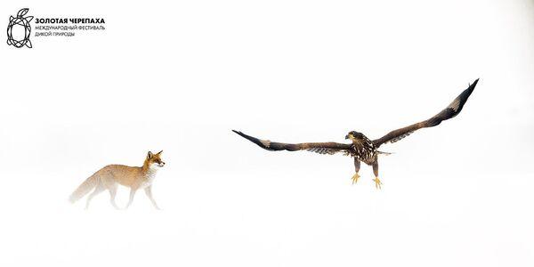 Снимок Территория фотографа Bence Mate, победивший в номинации Поведение животного фотоконкурса The Golden Turtle 2018 - Sputnik Азербайджан