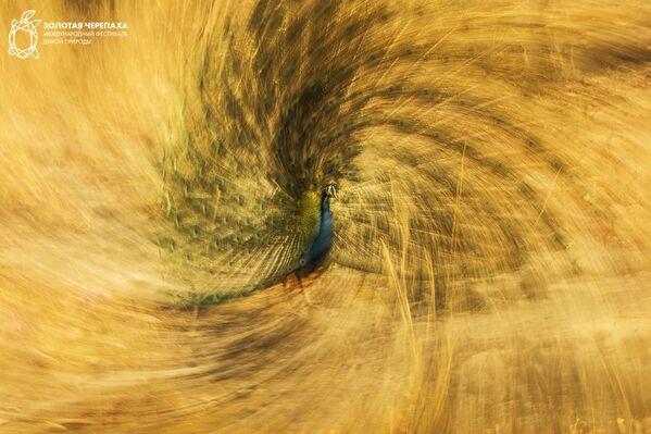 Снимок Королевская спираль фотографа Jose Pesquero, занявший третье место в номинации Искусство и образ природы фотоконкурса The Golden Turtle 2018 - Sputnik Азербайджан